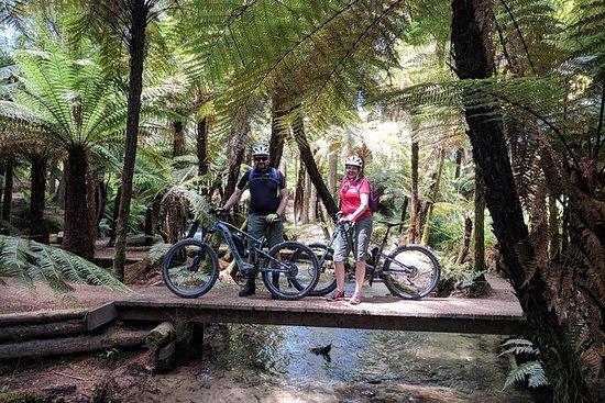Redwoods Mountain Bike Ebike Tour
