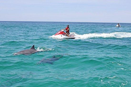 Tour del delfín Waverunner