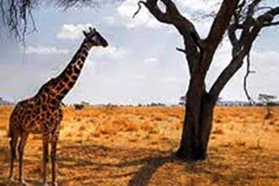 Erstklassige Tour Afrika