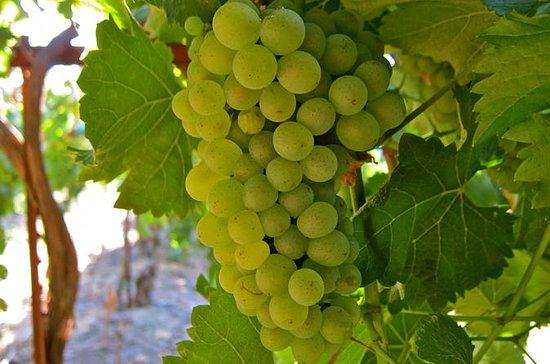 Vin, Spis og Slott Tours Loire Valley