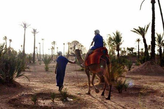 Private Tour, Riding Camel and Quad...