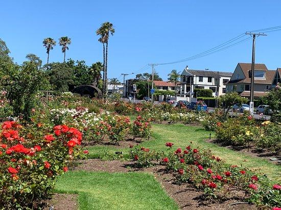 帕内尔玫瑰花园