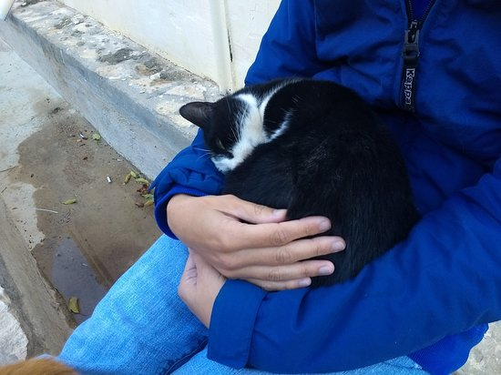 St. Catherine's Monastery Guesthouse: The monastery's cats are super friendly