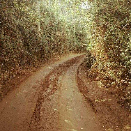 Constantina, Spain: sendero de los castañares