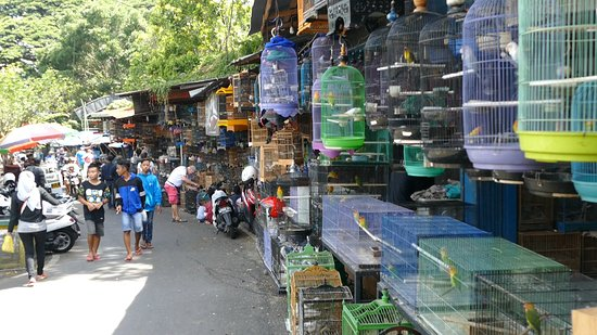 Birds and Flower Market Malang
