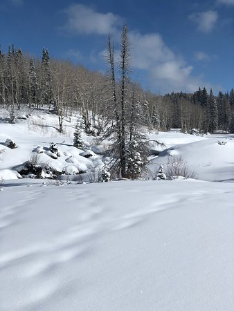 Mesa (Mesa County), CO: Winter wonderland