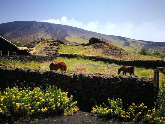 Etna escursioni a cavallo/Etna horse riding