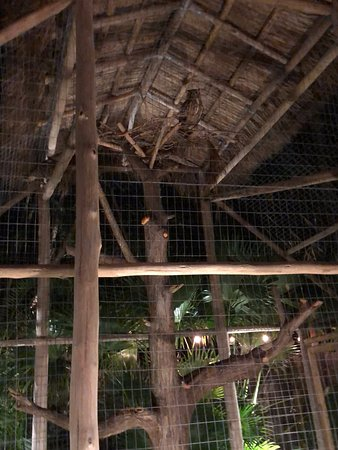 All You Can Eat BBQ Dinner and Show at Tropical Isle with Sightseeing Cruise: owls