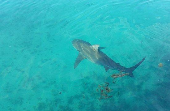 Ảnh về Cape Eleuthera Resort & Marina