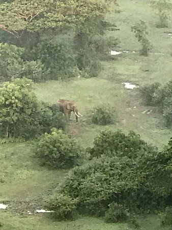 Lanka Ballooning Pvt Ltd: Wild Elephant as seen from above
