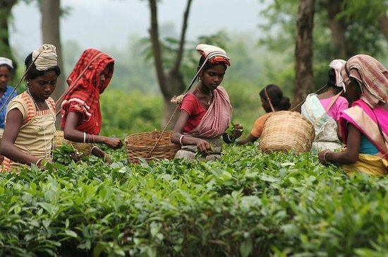 3-day Sreemangal Tour : Explore the tea capital of Bangladesh