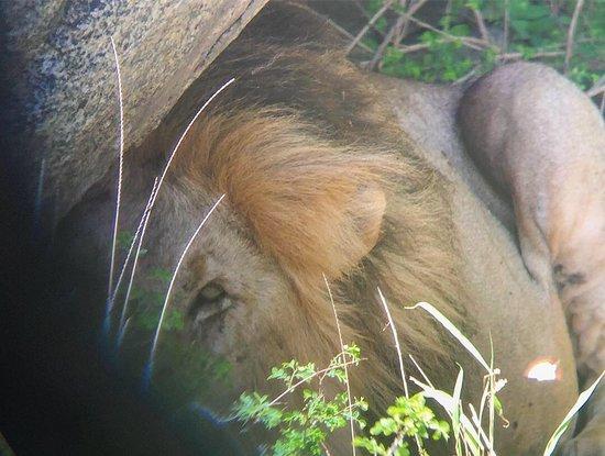 Tanzania Classic - 7 Days: Amazing - King of the Jungle!