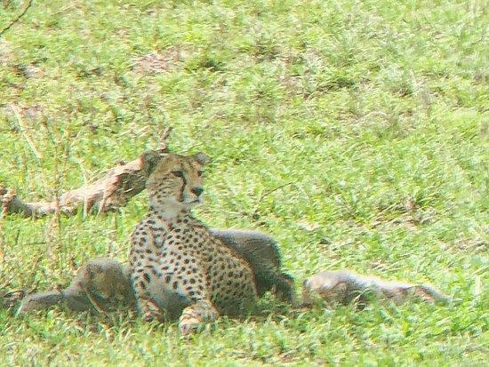 Tanzania Classic - 7 Days: Cheetah and 3 babies!!
