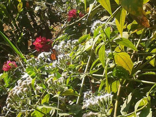 Pandit Jawaharlal Nehru Botanical Garden
