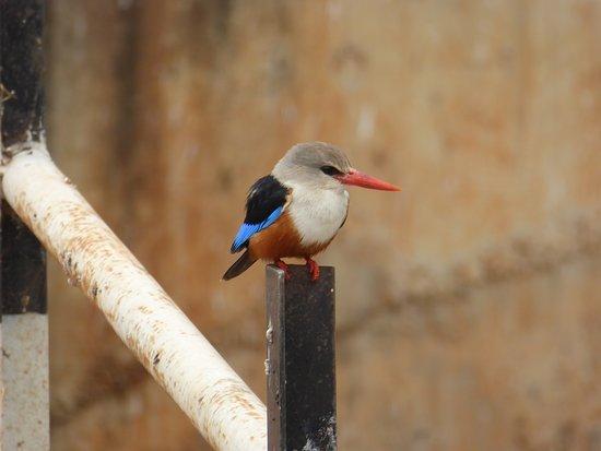Tarangire is famous for its birdlife