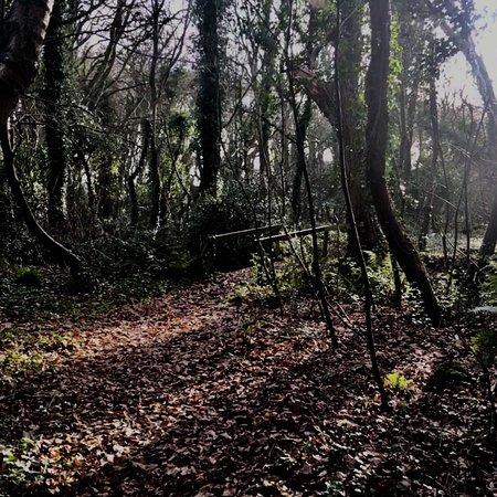 Tarbert, Ireland: John F Leslie Woodland Walk