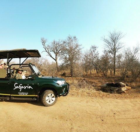 Safaria