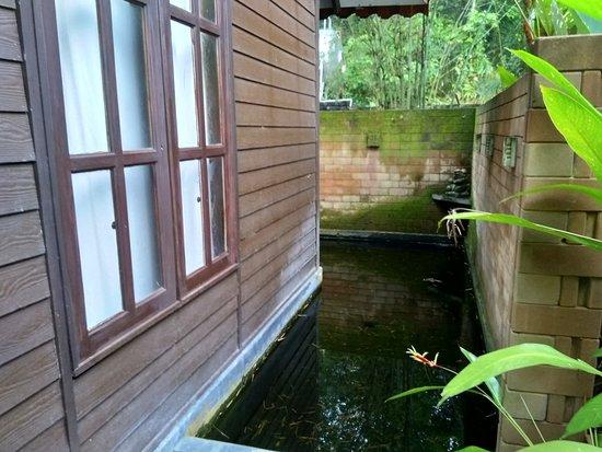 Beranang, Malasia: The pond outside the bathroom.