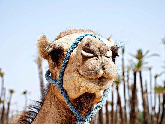 Imagine Saraha Tours (Morocco)