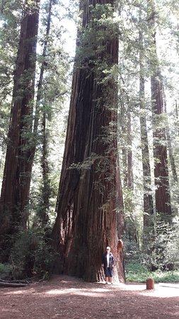 Humboldt County, Kalifornien: Grote bomen,