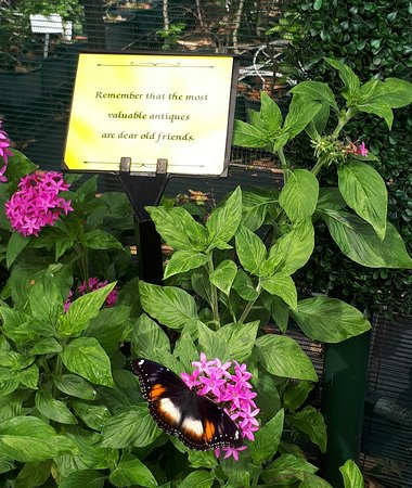 Bongaree, Australia: The Bribie Island Butterfly House has great little quotes amongst the plants