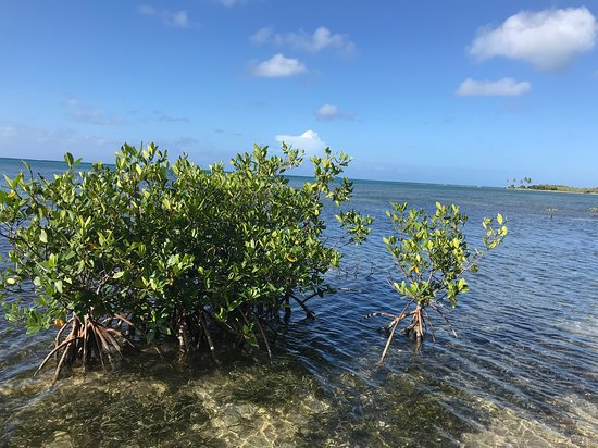 Cades Bay Photo