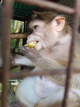 North Goa District, Индия: Primate trust india near mapusa in goa with the lovely amazing jo hicks .