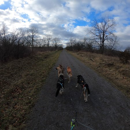 Loco, Willow, Colt, Lada and Lacey Running in the Gordon Harry Conservation Trail January 6, 2019