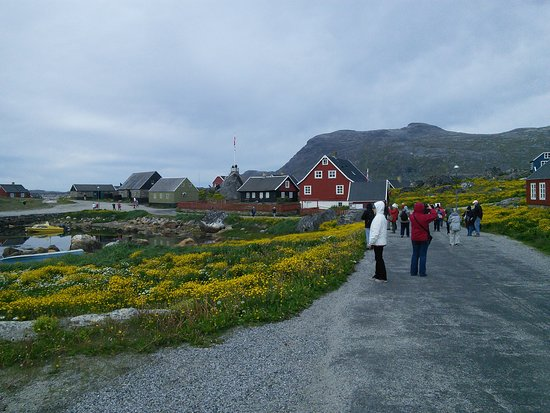 Nanortalik, Greenland: Part of the town, bright yellow flowers growing everywhere, houses painted brightly, mountains in back ground.