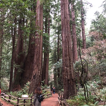 Muir Woods Shuttles And Tours San Francisco 2019 All