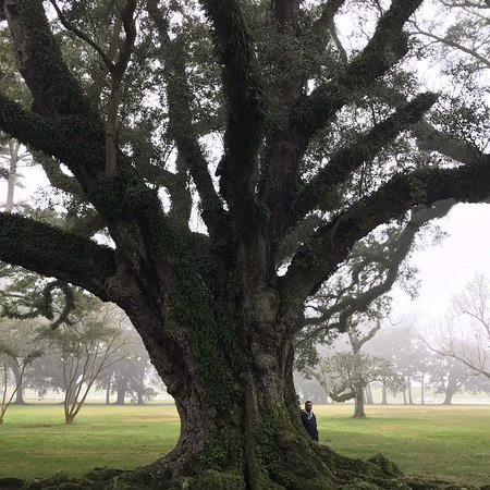 Oak Alley Plantation (Vacherie) - 2019 All You Need to ...