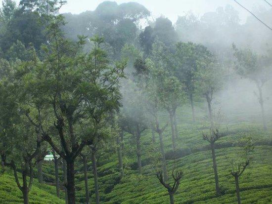 אוטי (אודהאגמנדאלאם), הודו: Ooty Packages 9⃣8⃣4⃣7⃣5⃣1⃣9⃣6⃣6⃣5⃣ 9⃣4⃣9⃣5⃣9⃣4⃣3⃣8⃣3⃣8⃣