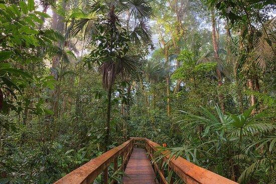 Reserva de la selva tropical Cinco...