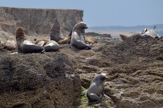 Phillip Island Wildlife Cruise med...