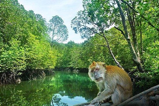 Mangrove Cruise in Cherating
