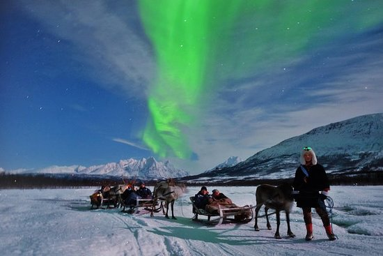 Northern Lights and Reindeer Sledding...