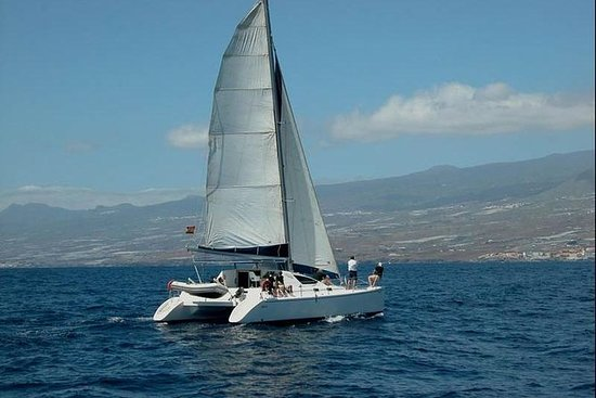 Luxury 3 Hour Catamaran Sailing In...