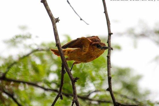 Birdwatching Tour in Tamarindo...