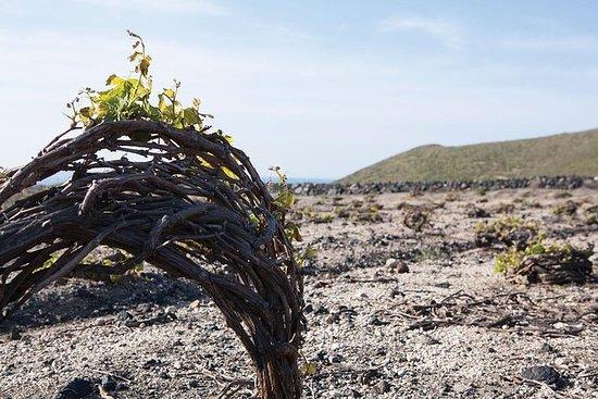 Santorini Wine Tasting & Photography...