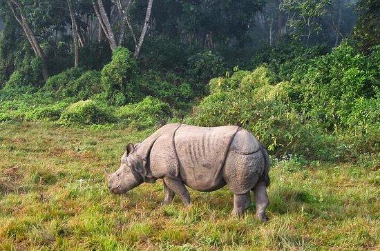 Tour de 4 noches a Pokhara y Chitwan...
