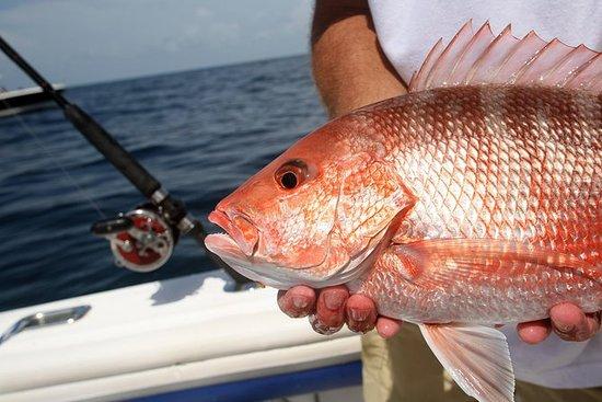 Parte inferior 'Shore' Pesca VIP Yate