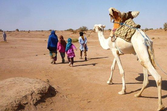 Sahara Feeling, Camel trekking to erg...