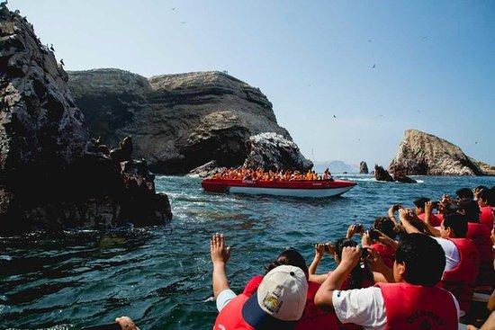 Tour privato a Paracas, Ica e