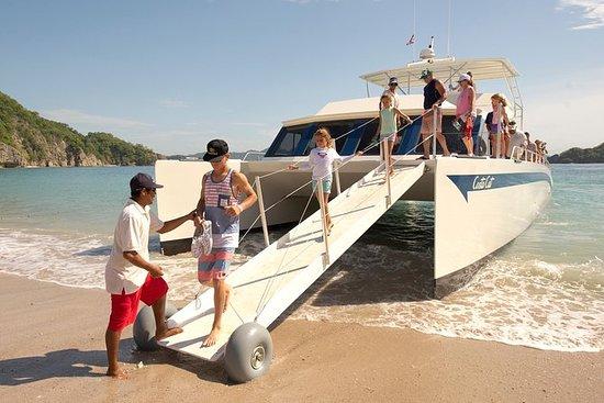 Tortuga島のコスタ猫ツアー
