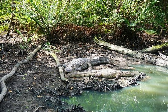 Rio Mangrove und Wanderung