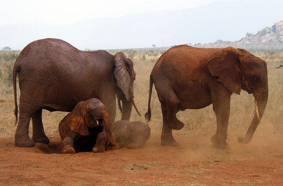 Ватаму, Кения: getlstd_property_photo