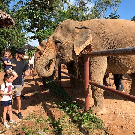 תמונה מSamui Elephant Sanctuary