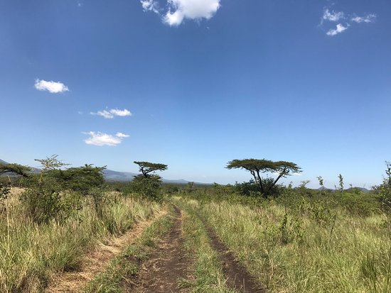 Homa Bay, Quênia: A secondary road in the park.