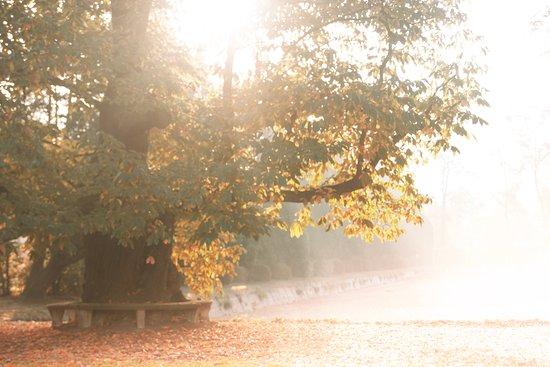 Flemish Brabant Province, Belgien: Heerlijckyt van Elsmeren in de herfst