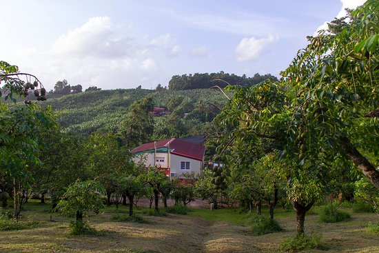 Le Robert, Мартиника: Photo visite exploitation agricole